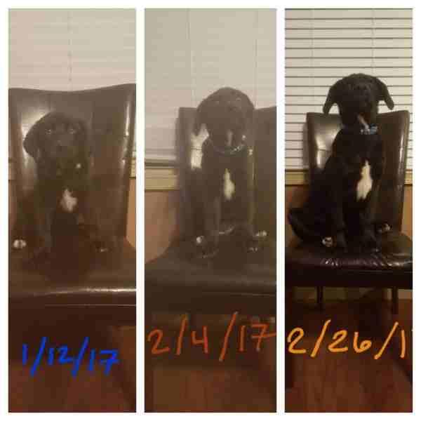 shelter dog grows up